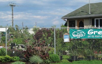 Supporting Local:  Green Thumb Garden Centre